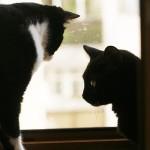 Emma şi Felix, cină romantică la fereastră