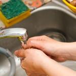 Se spală bine ciupercile