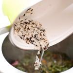 Se spală orezul şi se adaugă în oală.