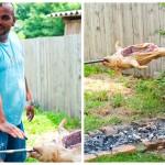 Verificăm focul şi fixăm tija cu tot cu purcel cam la 60- 70 cm înălţime deasupra focului.