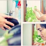 Se spală vinetele cu tandreţe. Se culeg câteva rămurele din superb mirositorul busuioc.