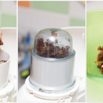 Se pun curmalele în robotul de bucătărie şi se macină câteva minute. Apoi se adaugă peste ele o cană mică cu apă caldă.