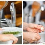 Spălăm cimbrul, curăţăm căţeii de usturoi