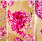 Trandafirii se ţin între degete, se trage codiţa şi cu ea receptaculul şi centrul florii apoi se taie baza albă a petalelor cu forfecuţa.